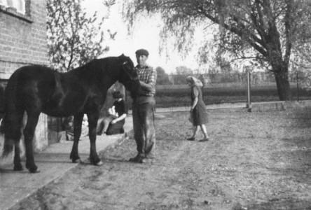 Wyprowadzanie konia